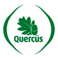 quercus100.jpg